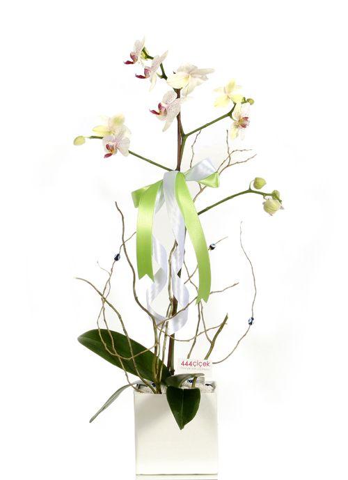 Orkide Çiçek