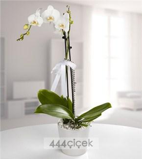 kadınlar günü çiçekleri